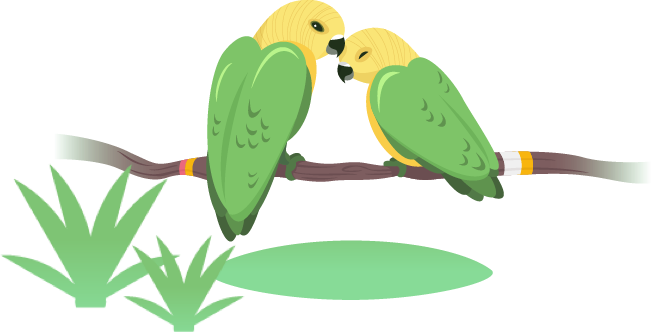 在鸟舍了解有关鸟儿的 3 个事实