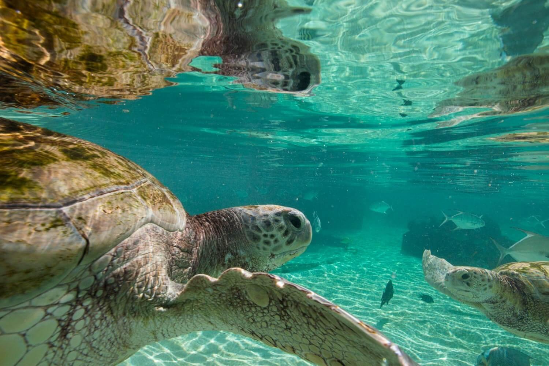 baha mar sanctuary turtles