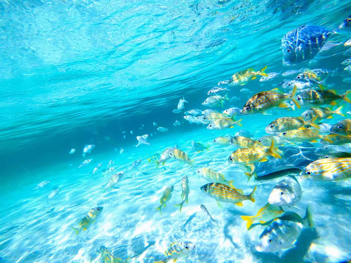 Vie aquatique bahamienne